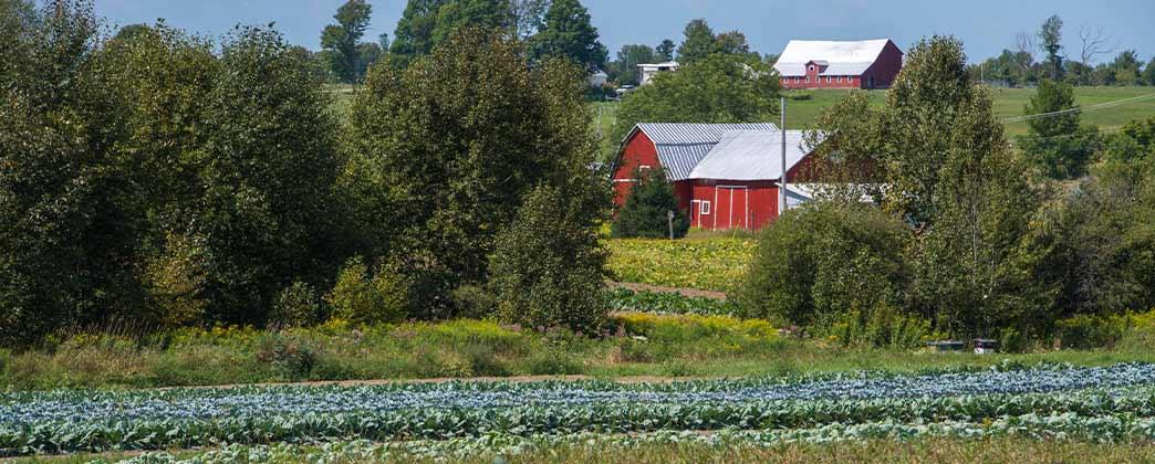 A New York State farm.
