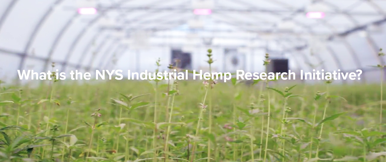 What is the NYS Industrial Hemp Research Initiative?